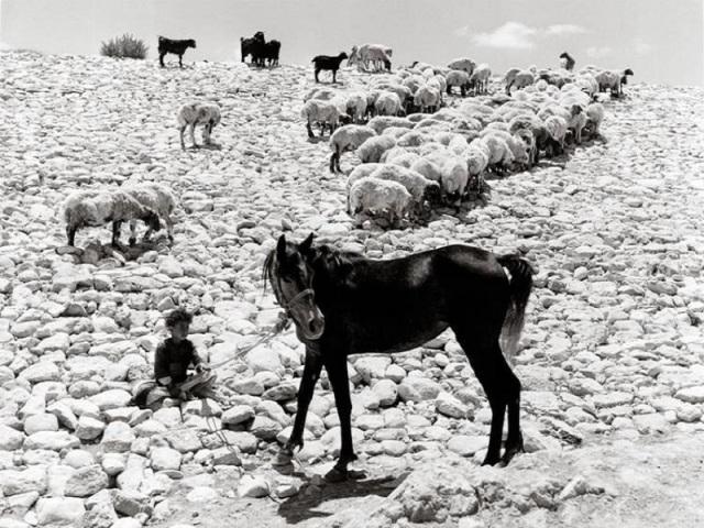 ( Carmel Plateau - Foto © Izis Bidermanas - 1953)
